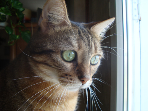 Crapule chat femelle adopt e 5 ans le t moignage de sa for Adaptation chat nouvelle maison