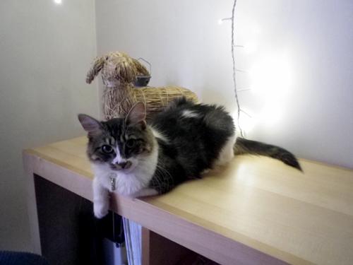 Prunelle chat femelle adopt e 1 an le t moignage de sa for Adaptation chat nouvelle maison